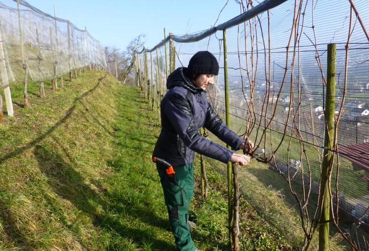 Startschuss für Bio-Weinbau Knechtle Glogger