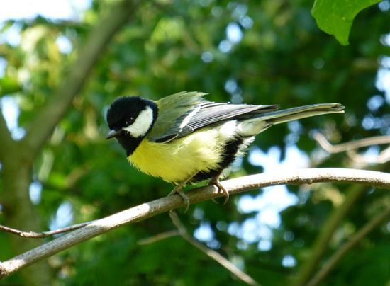 Angebot Ornithologiekurse