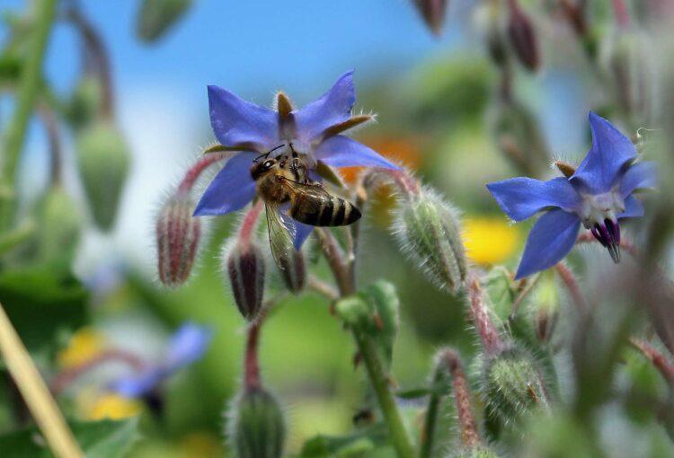 Online-Vortrag Gärtnern ohne Gift